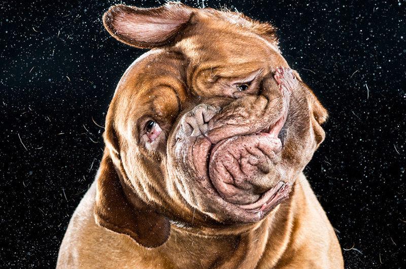 Встряхнёмся : фотографии собак Кэрли Дэвидсона