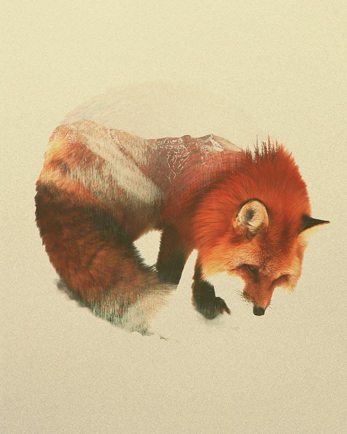 Портреты животных норвежского художника Andreas Lie