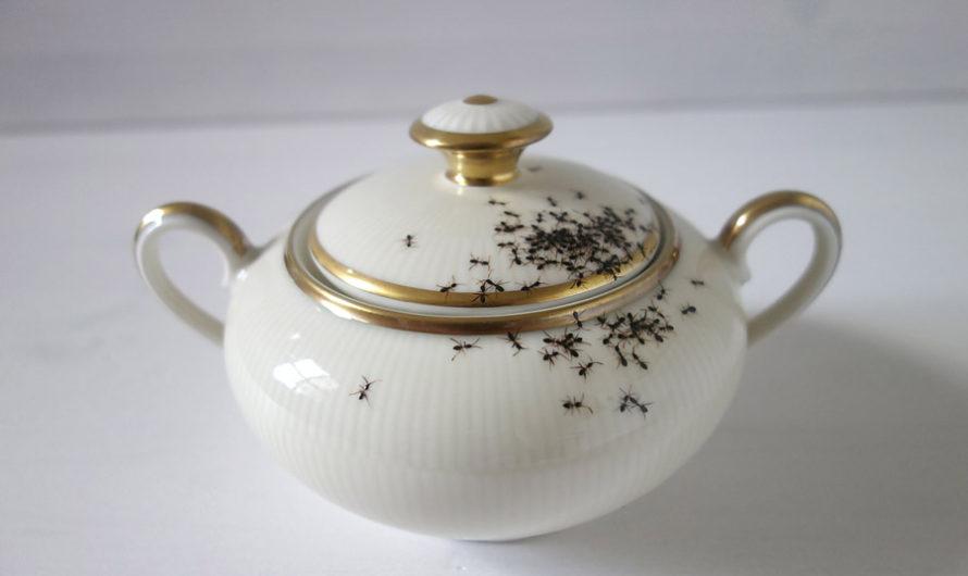 Чай с муравьями : фарфор Evelyn Bracklow