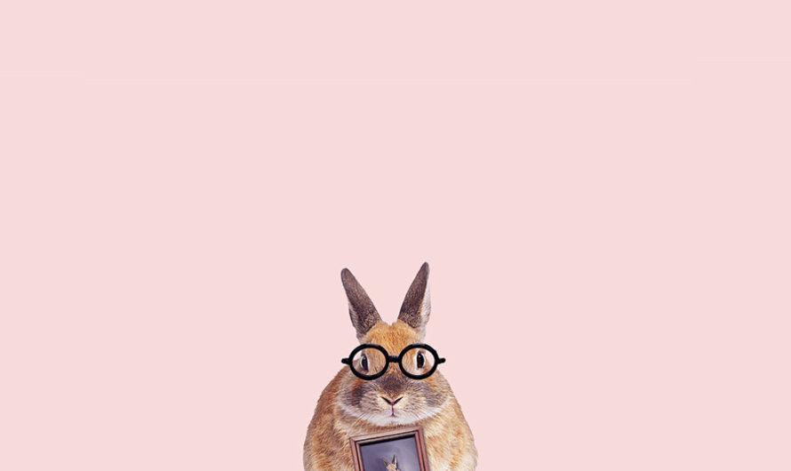 Слегка наивно : «Уши кролика» дизайнера Dilok Lak