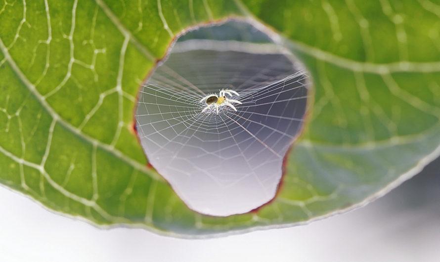 Как заштопать лист : Фотографии насекомых Bertrand Kulik