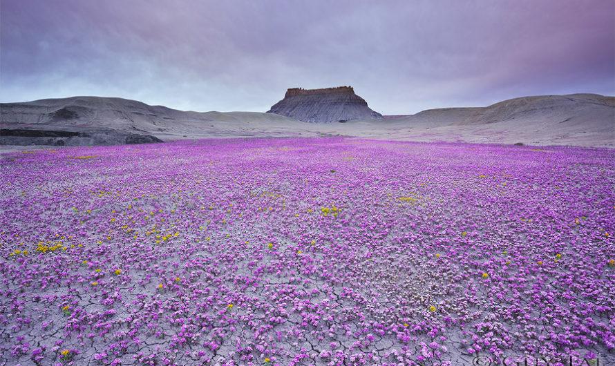 Цветущая пустыня : Фотографии американского Запада Guy Tal