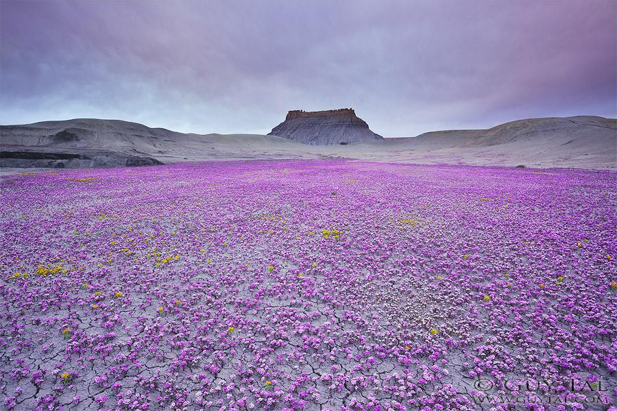 Цветущая пустыня - фотографии пустошей американского Запада Guy Tal