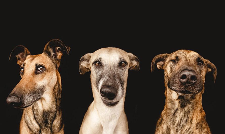 Забавные питомцы : Собачье трио Elke Vogelsang