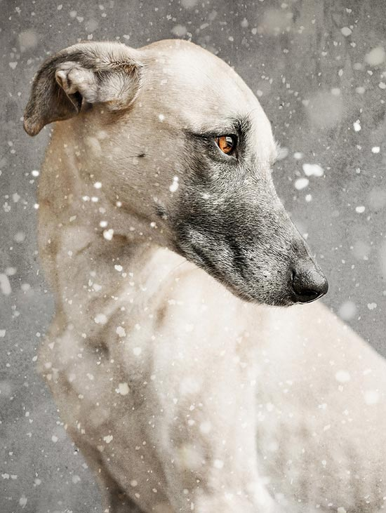 Забавные питомцы - собачье трио Elke Vogelsang