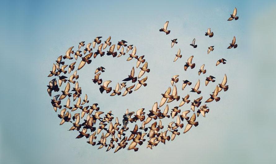 Полётный строй : Иерархия Shaun Kardinal