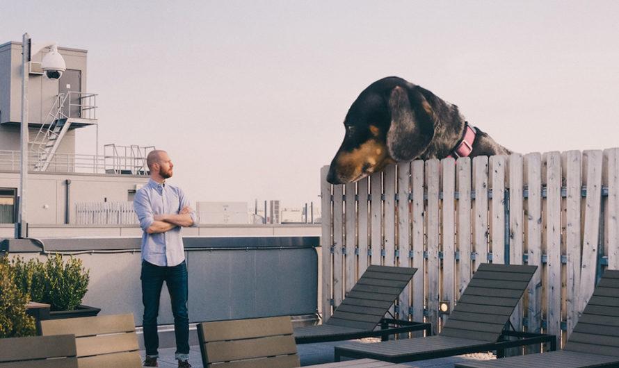 Такса в Бруклине : гигантская собака Mitch Boyer