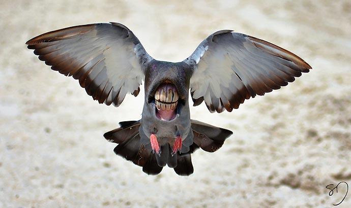 «Big Mouth Birds» : орнитологические эксперименты художницы Sarah DeRemer