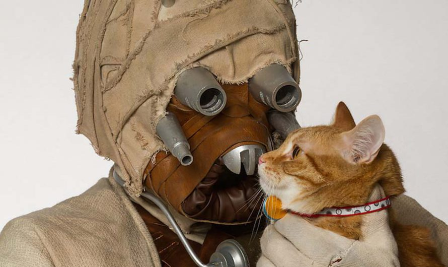 Ничто человеческое… Фанаты Star Wars провели фотосессию с животными из приюта