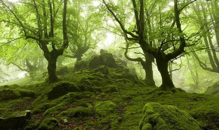Туманные леса фотографа Oskar Zapirain