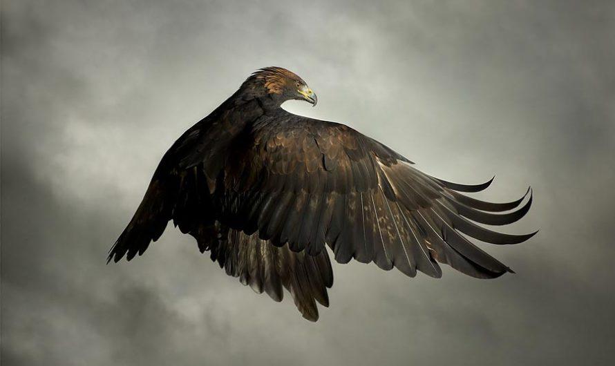 Время охоты : Хищные птицы на фотографиях Mark Harvey